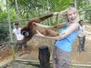 the_monkey_loves_golden_hair_20091230_1386027468
