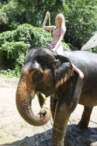 elefantenwaschung_450