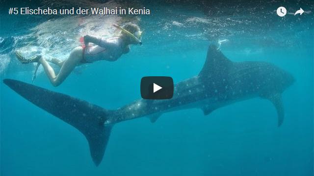 ElischebaTV_005_640x360 Elischeba und der Walhai in Kenia